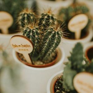 Op zoek naar groenversiering op jullie bruiloft? Mini cactusjes bij Groen Trouwen!