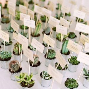 Op zoek naar een huwelijksbedankje voor jullie bruiloft? Mini catus bij Groen Trouwen!